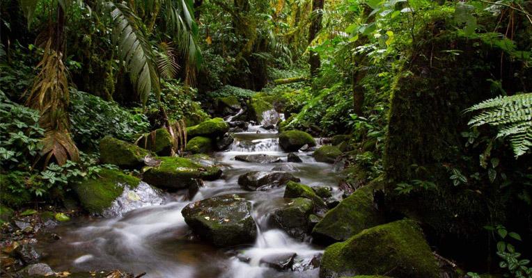 Rainforest Alliance - Case van de Toekomst